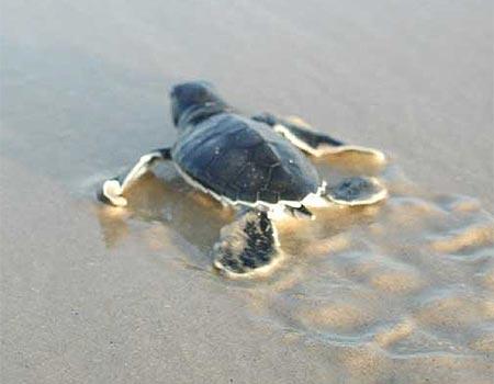 צילום: יובל שרון, החברה להגנת הטבע