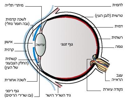[HE] סוגים של כאבי ראש, גורמים וטיפולם מדריך שני Eye_other
