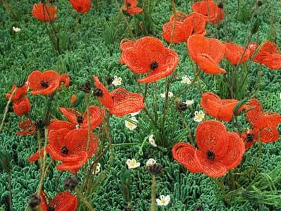 פרחים אדומים יפים