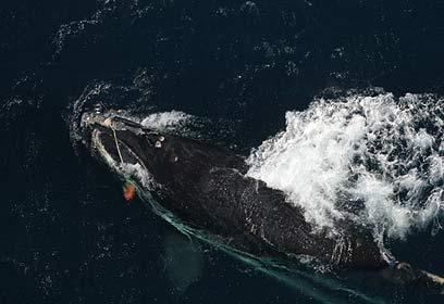 Photo courtesey florida wildlife federation for Florida fish and wildlife commission