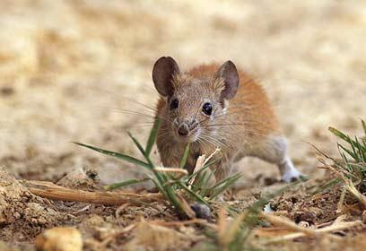 צילום: יואב פרלמן , החברה להגנת הטבע