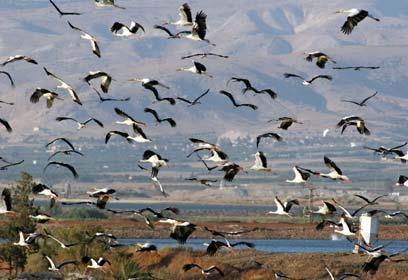 צילום: יהונתן מירב, החברה להגנת הטבע