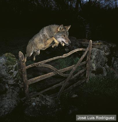 צילום: José Luis Rodríguez / Veolia Environnement Wildlife Photographer of the Year 2009 ©