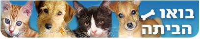 מדור אימוץ כלבים וחתולים