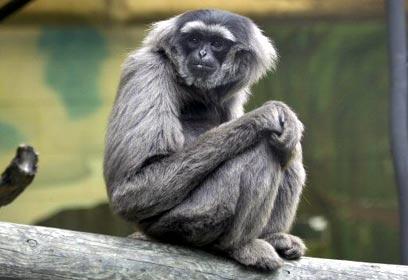 Картинки по запросу קופים מצחיקים
