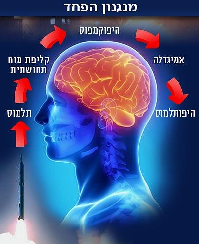 הפעלת נתיבי הפחד במוח (איור: ynet, shutterstock)