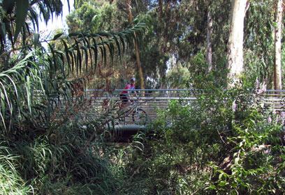 גשר הבטון (צילום: אייל פרידמן)