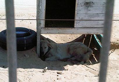 """כלב שמירה בבסיס פלמחים (צילום: באדיבות """"תנו לחיות לחיות"""")"""