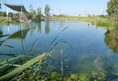 השלולית שהפה לאגם (צילום: ברברה אהרונסון וברק גפני)