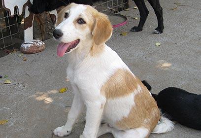 סנסציוני נאבקת בסרטן וממשיכה להציל כלבים נטושים JQ-78