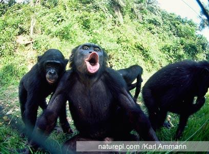 צילום:  WWF