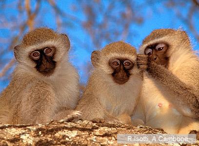 צילום: Homo Ambiens / WWF-Canon
