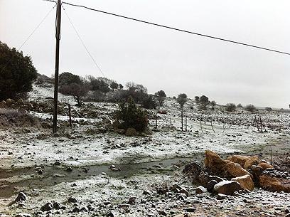 שלג במרום גולן (צילום: מאור בוכניק)