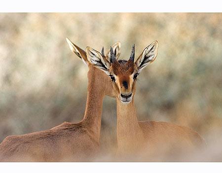 צילום: דורון ניסים, רשות שמורות הטבע והגנים