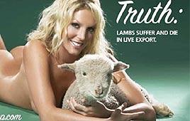 למען כל הכבשים הסובלות