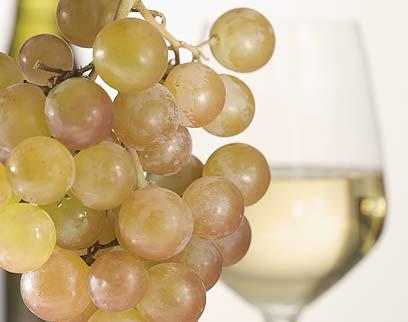 בעתיד: אפשר יהיה להפיק יין? (צילום: Index Open)