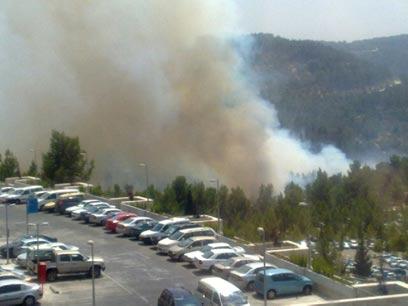 תופעת שריפות היער בישראל - פעולות טרור יזומות