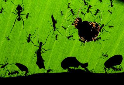 צילום: Veolia Environnement Wildlife Photographer of the Year 2010 / Bence Máté
