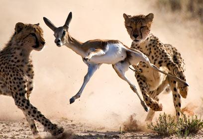 צילום: Veolia Environnement Wildlife Photographer of the Year 2010 / Bridgena Barnard