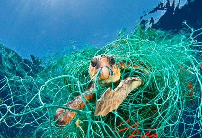 צילום: Veolia Environnement Wildlife Photographer of the Year 2010 / Jordi Chias Pujol