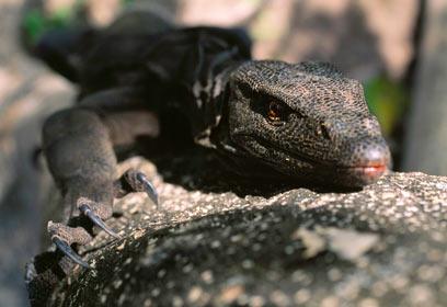 צילום: IUCN / Tim Laman