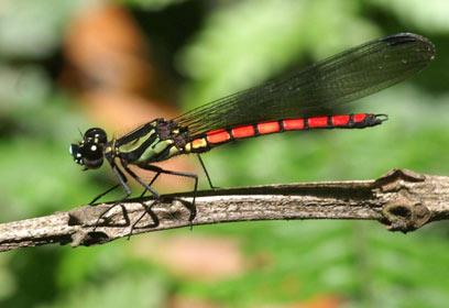 צילום: IUCN / Kai Schuette