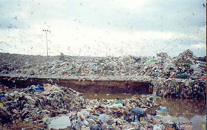 חיריה לפני השיקום (צילום: ארגון חיים וסביבה)