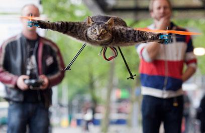 חתול פוחלץ והפך למסוק לאחר מותו