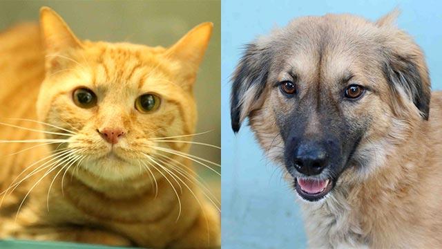 פנטסטי בואו לאמץ: כלבים וחתולים מחפשים בית חם ZW-63