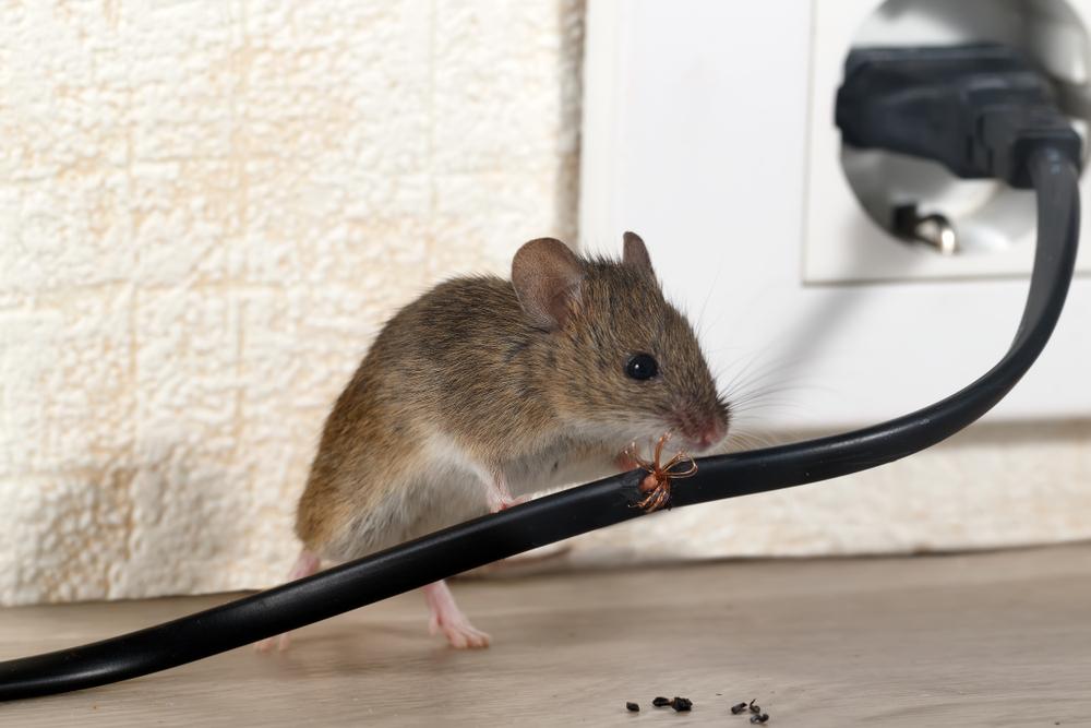 הוראות חדשות אמאלה עכבר! כך תמנעו הגעת מכרסמים לביתכם OP-54