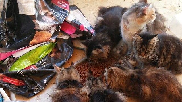 מגה וברק אשדוד: הזניחה חתולים גזעיים ונקנסה באלפי שקלים BO-32