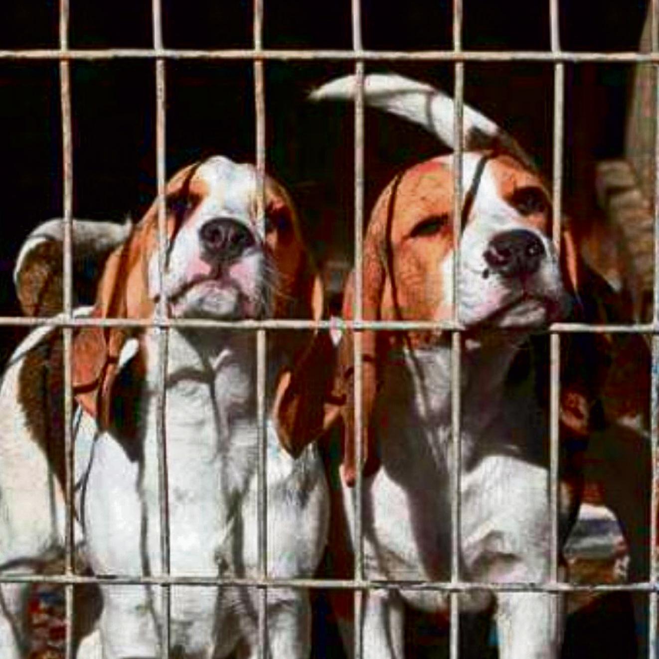 רק החוצה הפנים האמיתיות של תעשיית מכירת הכלבים בישראל VD-96