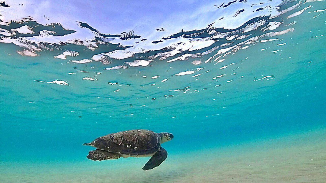 צילום: אילן אלגרבלי, רשות הטבע והגנים