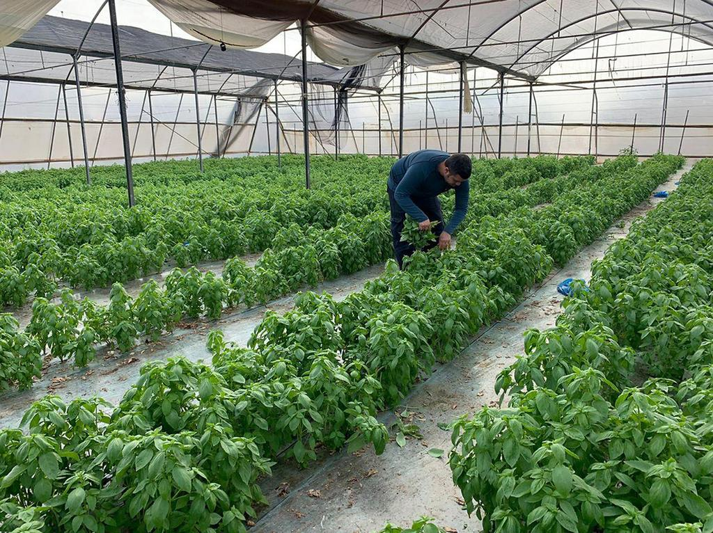 חקלאי בבקעת הירדן ()