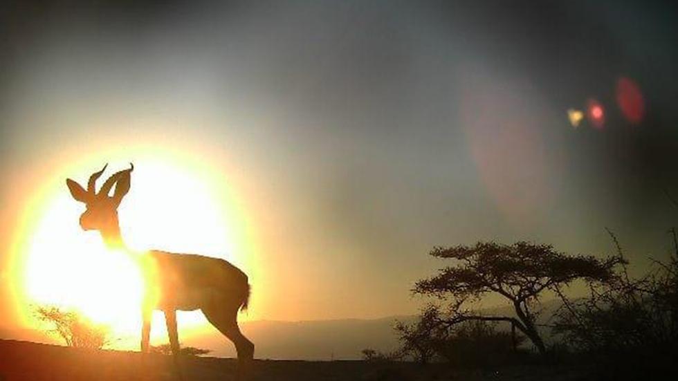 צילום:  אריה רוזנברג רשות הטבע והגנים