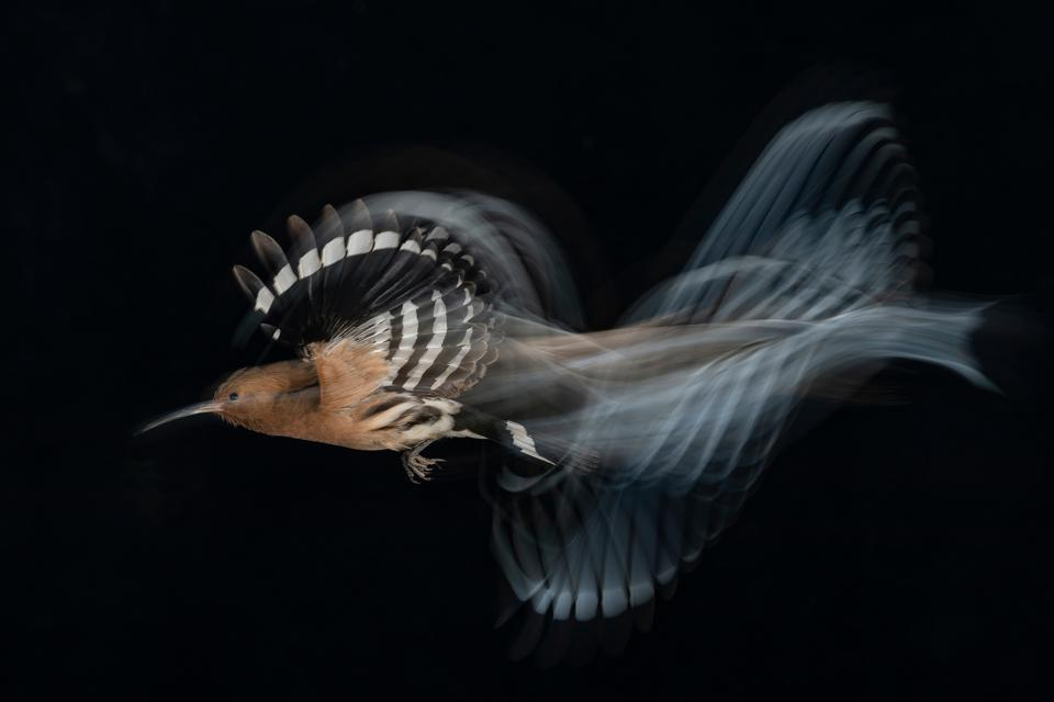 Gadi Shmila/Bird Photographer of the Year