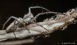 צילום: ליאור קסטנברג, רשות הטבע והגנים