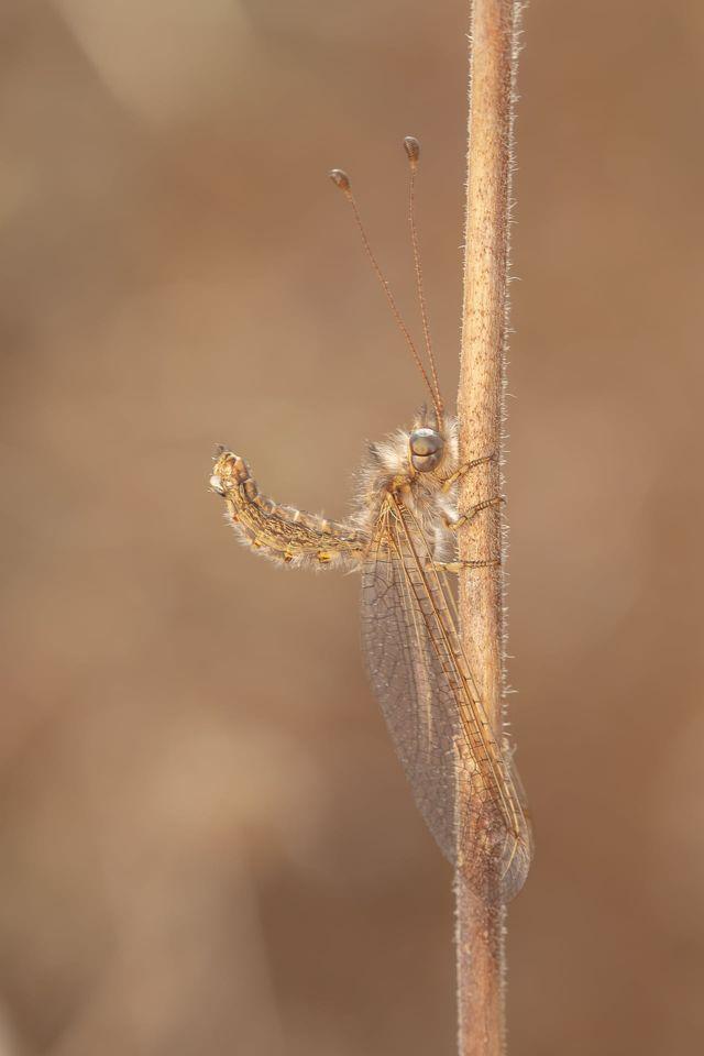 צילום: נועה אבהר