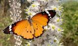 צילום: האני שינוואי, רשות הטבע והגנים