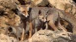 צילום: יובל דקס, החברה להגנת הטבע
