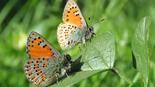 צילום: אבנר רינות, החברה להגנת הטבע