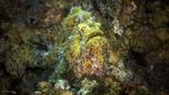 """צילום: שבי רוטמן, מנהלת אוסף הדגים במוזיאון הטבע ע""""ש שטיינהרדט"""