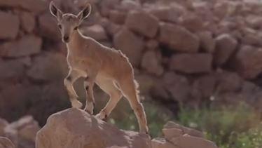 צילום: אייל בן גיאט, רשות הטבע והגנים