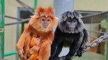 """צילום: אבינועם זיסו. גן החיות התנ""""כי בירושלים"""