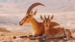 צילום: עמרי יוסף עומסי, רשות הטבע והגנים