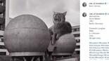 מתוך עמוד האינסטגרם Cats of Brutalism